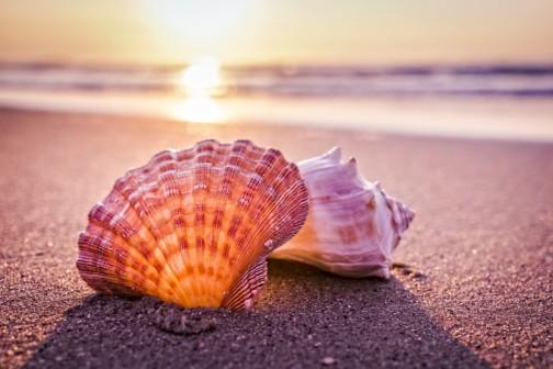 shells-on-the-beach.jpg
